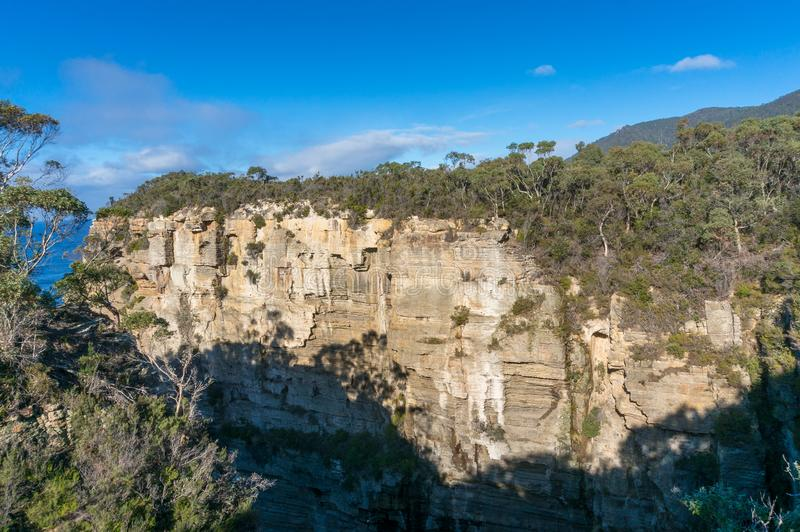 Steep rock cliff covered with eucalyptus trees. Tasman National Park nature landmark in Australia stock photo