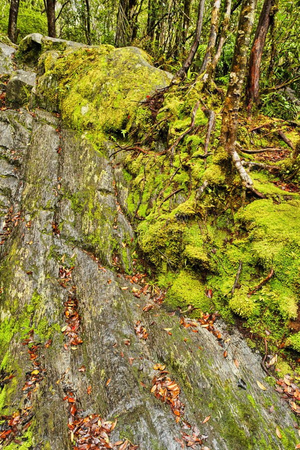 Steep släpar Franz Josef Glacier, Nya Zeeland arkivfoton