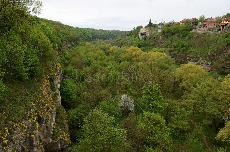 The steep stone walls of the old fortress are covered with yellow flowers and green trees against the background of the. Old tower, green, yellow trees and pear stock image
