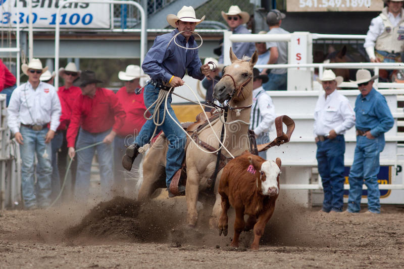 Download Steer Roping - PRCA Sisters, Oregon Rodeo 2011 Editorial Stock Image - Image: 19865504