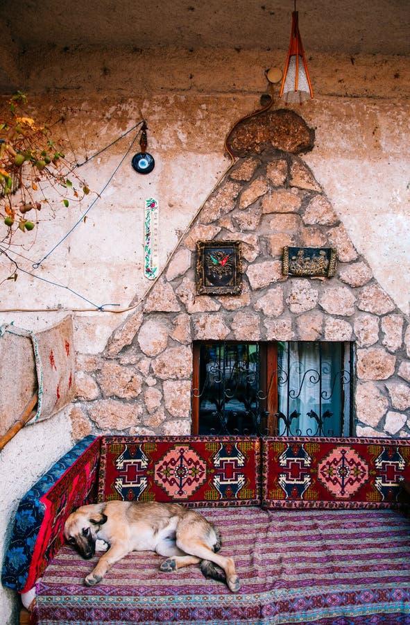 Steet在土耳其样式长沙发的狗睡眠在土耳其地方房子里 库存照片