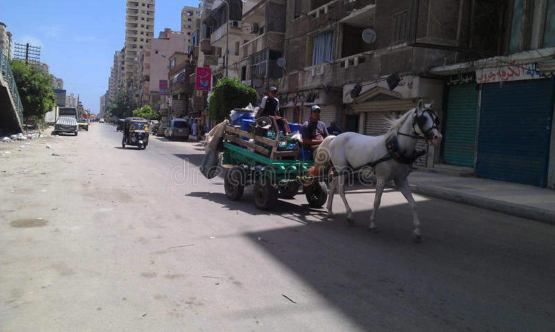 Steet von Leuten Pferde-Ägyptens Alexandria stockfotos