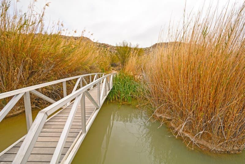 Steg über einem Sumpfgebiet-Teich lizenzfreie stockbilder