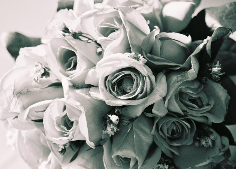 Download Steg arkivfoto. Bild av blomma, vitt, closeup, steg, förälskelse - 22474