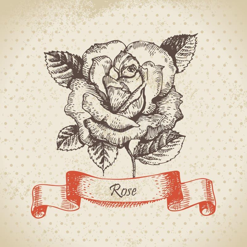 Steg royaltyfri illustrationer