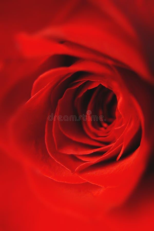 Download Steg fotografering för bildbyråer. Bild av makro, blomma - 45173