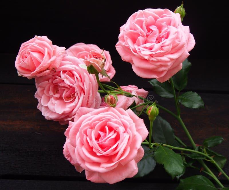 Download Steg arkivfoto. Bild av härlig, present, steg, pink, gardening - 76703548