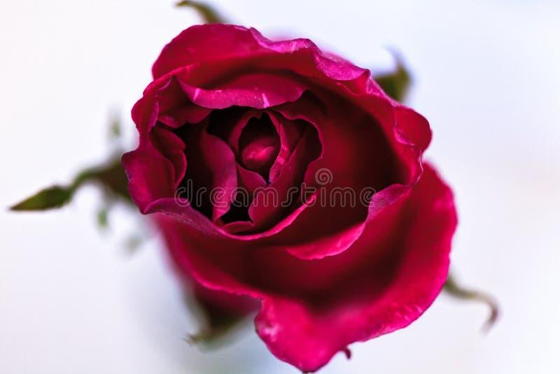 Steg blomman av förälskelse arkivfoton