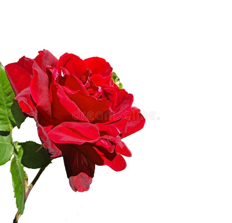 Steg den röda isolerade sidan och den bästa sikten royaltyfri bild