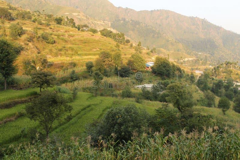 Steg-för-steg fält i Himalayasberget royaltyfri fotografi
