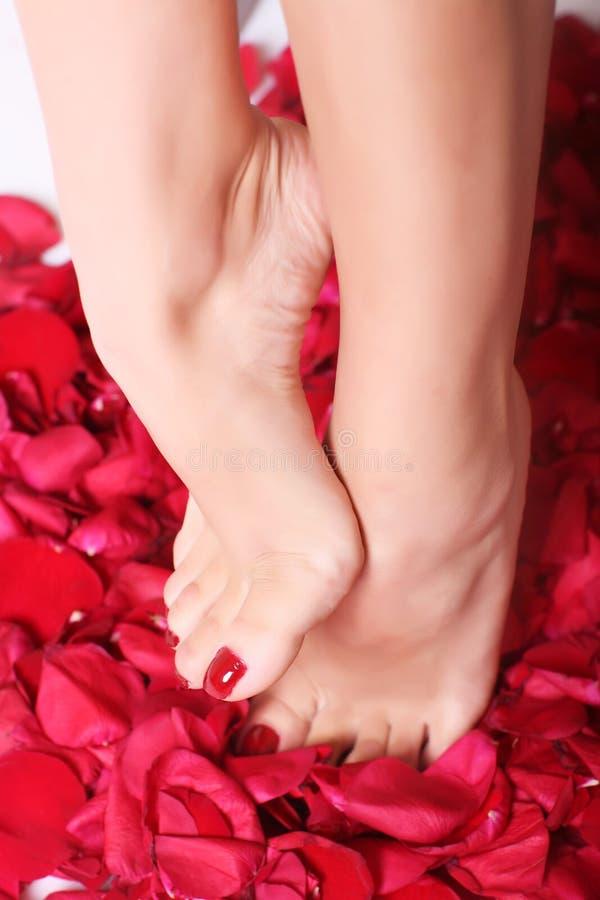steg foten petals royaltyfria bilder