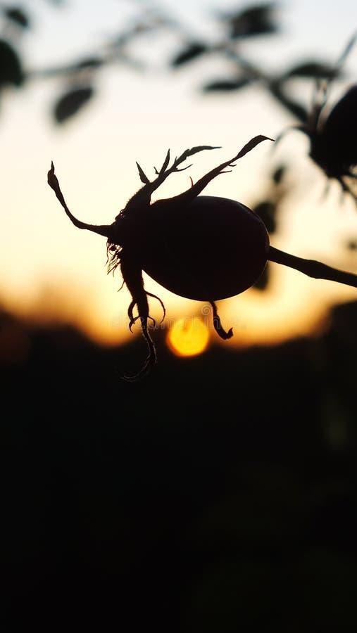 Steg kärnar ur och solnedgången royaltyfria foton