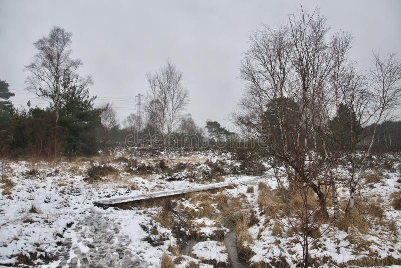 Steg/Promenade zwischen Heide, Gras und Bäumen an einem grauen Tag des verschneiten Winters stockfotografie