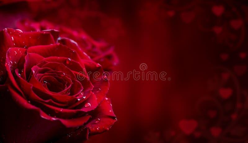 Steg röda ro Bukett av röda ro Flera rosor på granitbakgrund Valentindag, bakgrund för bröllopdag royaltyfria foton