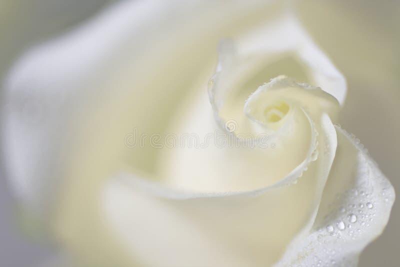 steg white royaltyfri bild