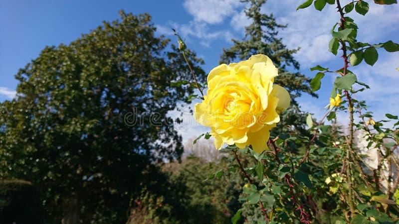 steg yellow royaltyfria bilder