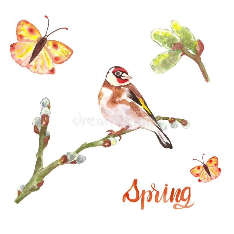 Steglits för vattenfärgvårfågel på videfilialen, knoppar och den färgrika flygafjärilen som isoleras arkivfoton