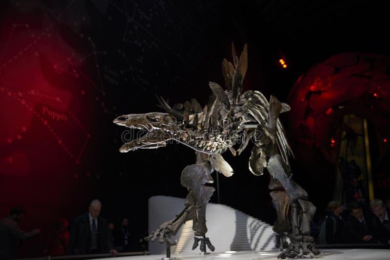 stegosaurus στοκ φωτογραφία με δικαίωμα ελεύθερης χρήσης