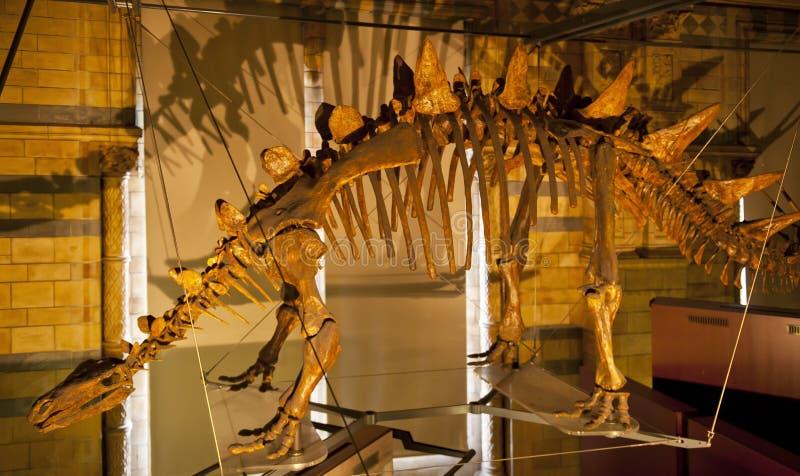 stegosaurus stockbild