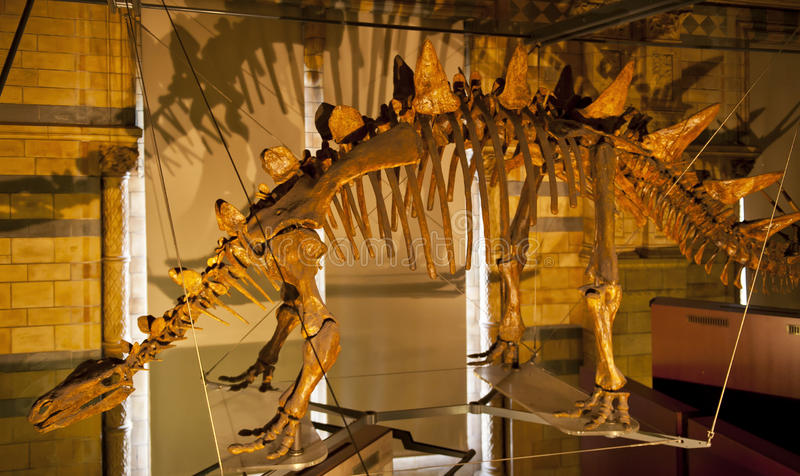stegosaurus στοκ εικόνα