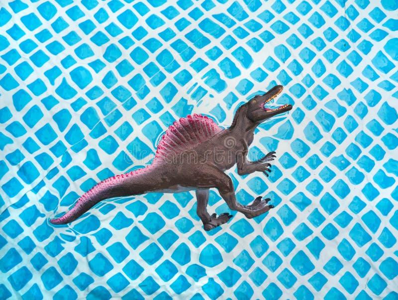 Stegosaurus del dinosaurio del juguete que flota en el agua en la piscina el verano fotografía de archivo