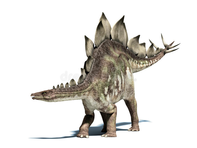 Stegosaurus dinosaur. Isolated at white, with clipping path.
