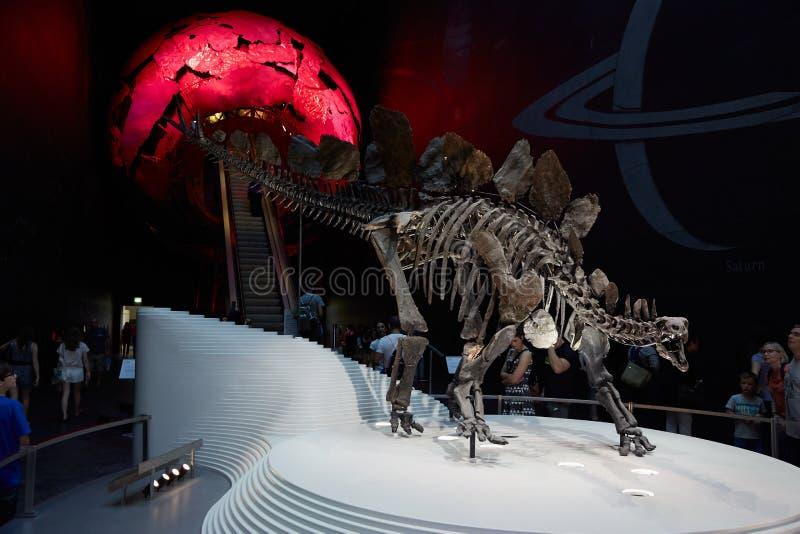 Stegozaur, dinosaura kościec w historii naturalnej muzeum w Londyn zdjęcie royalty free