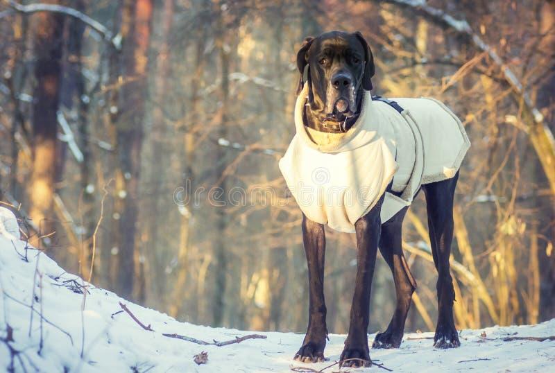 Stehender Hund im Wald lizenzfreie stockfotos