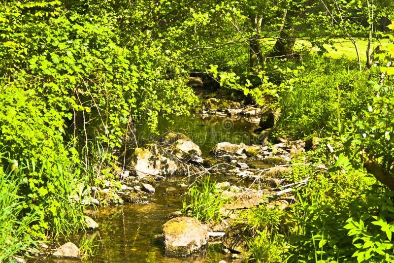 Stehender kleiner bayerischer Fluss im Frühjahr am Sonnenschein stockbild