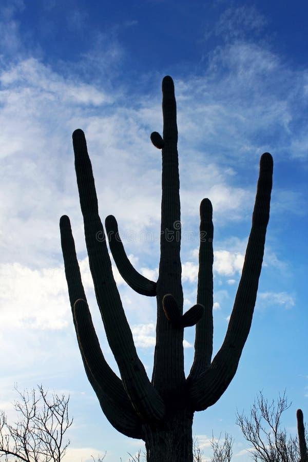 Stehender Riese am Saguaro-Nationalpark lizenzfreie stockbilder