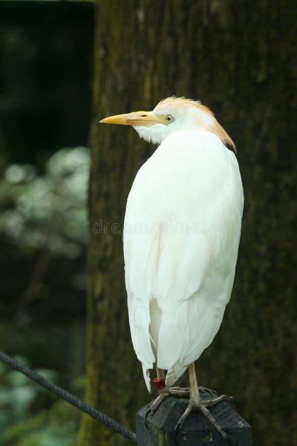 Stehender Vogel stockbilder