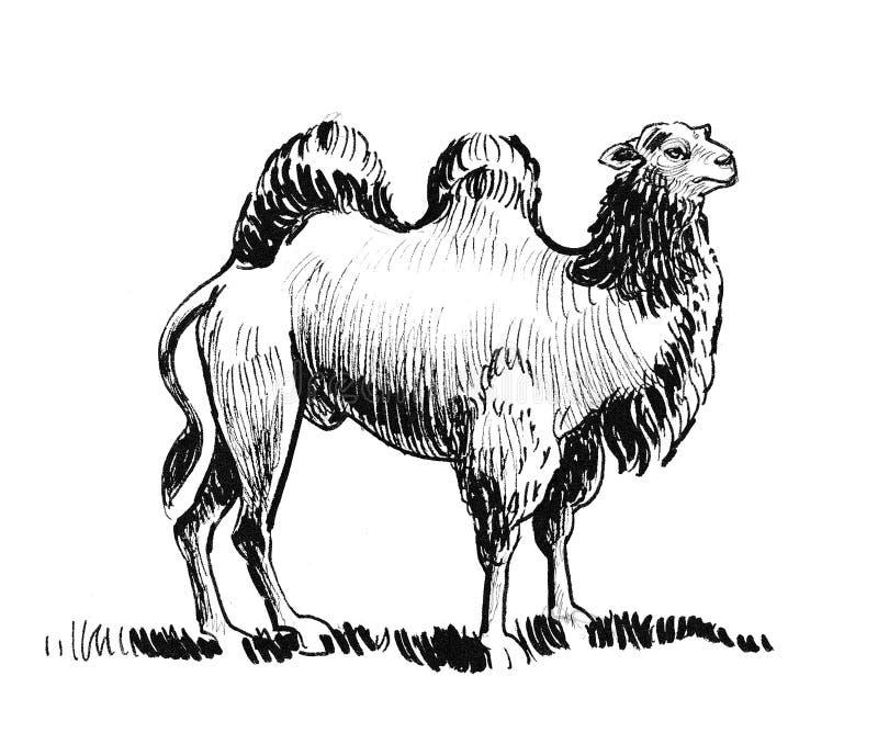 Stehendes Kamel stock abbildung