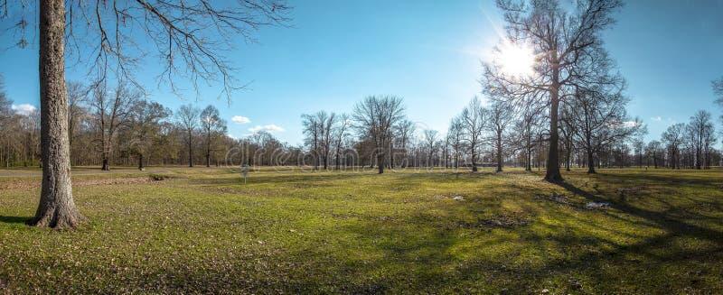 Steife Bäume der glühenden Sonne der blauen Himmel in der Tiefe des Winters lizenzfreies stockfoto