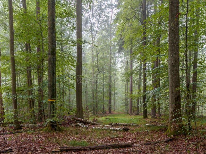 Steigerwald skog royaltyfri bild