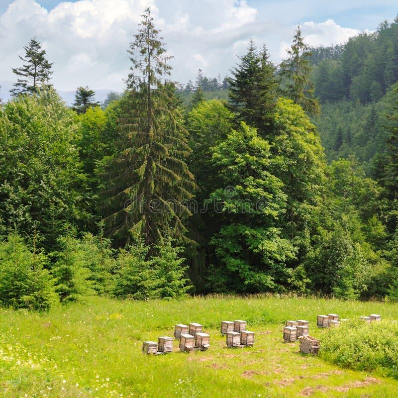 Steigungen von Bergen, von Koniferenbäumen und und von Bienenbienenstöcken im Bienenhaus stockfotografie