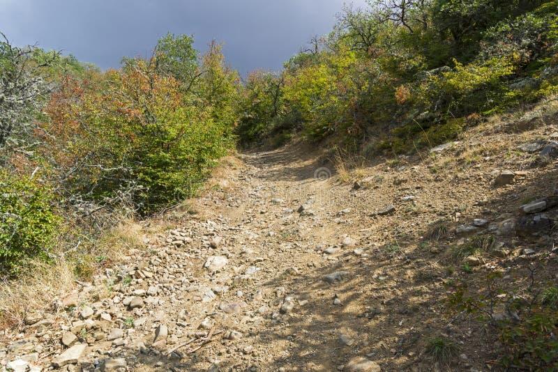 Steile afdaling op een landweg in een bergbos royalty-vrije stock afbeelding