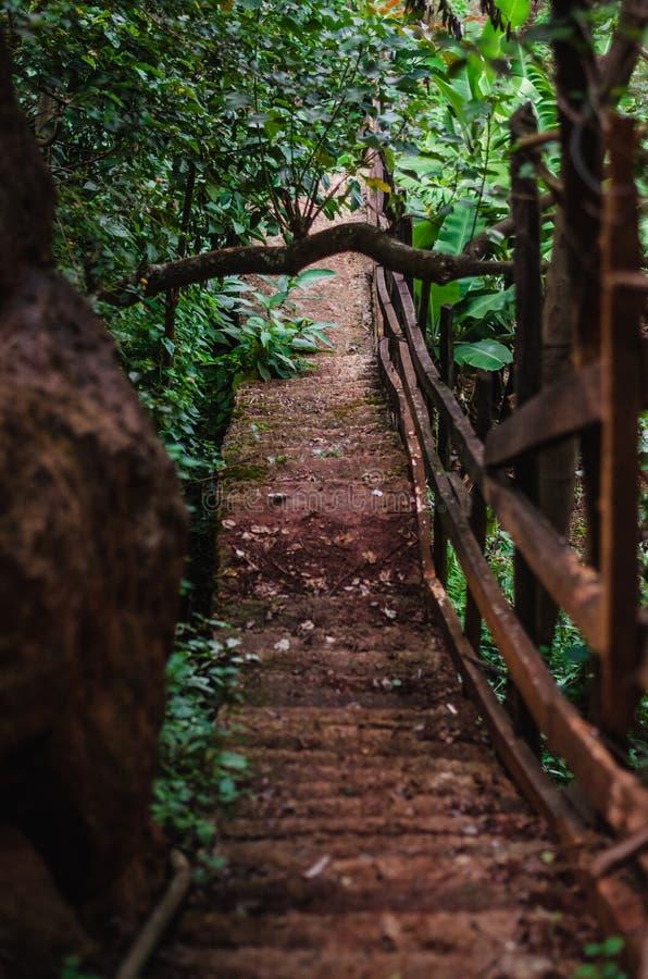 Steile stappen - onderaan een weg in een bos stock foto's