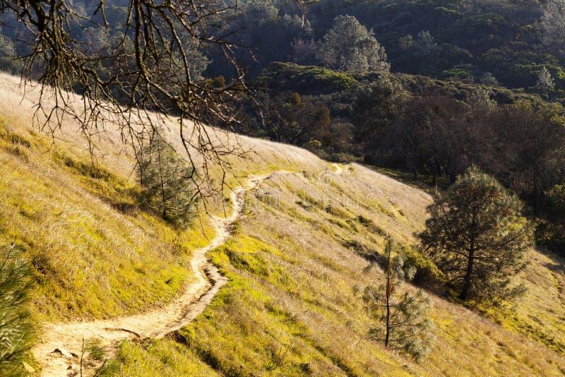 Steiler Erdweg herauf Hügel-Seiten-Berg Diablo California stockfotos