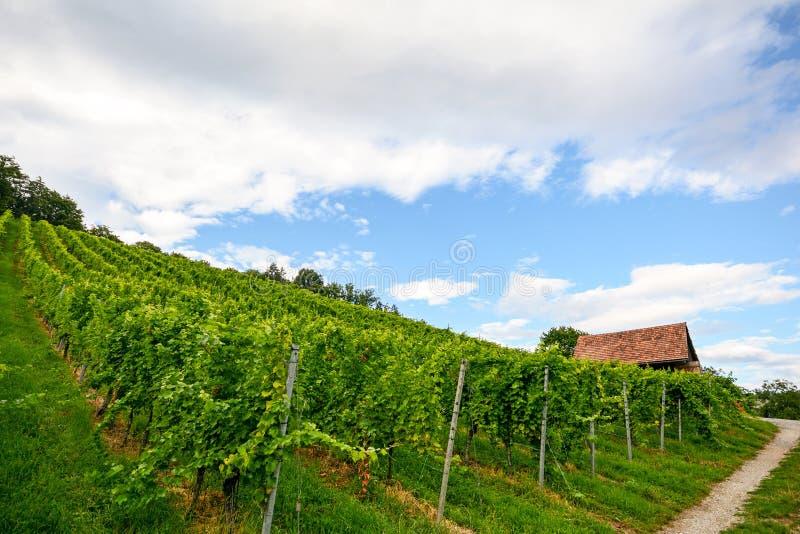 Steiler Weinberg nahe bei einem Gehweg mit alter Hütte nahe einer Weinkellerei im Toskana-Weinanbaubereich, Italien lizenzfreies stockfoto