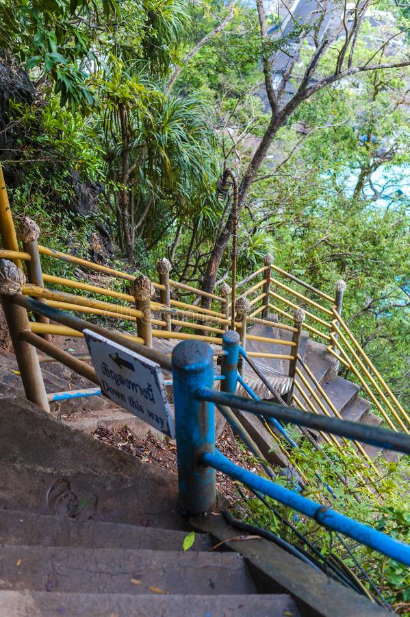Steiles Treppenhaus in einem Dschungel stockbild