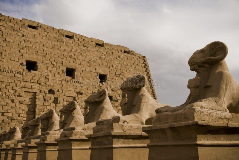 Stein-RAM ging Sphinxskulpturen am Tempel von morgens voran lizenzfreie stockbilder