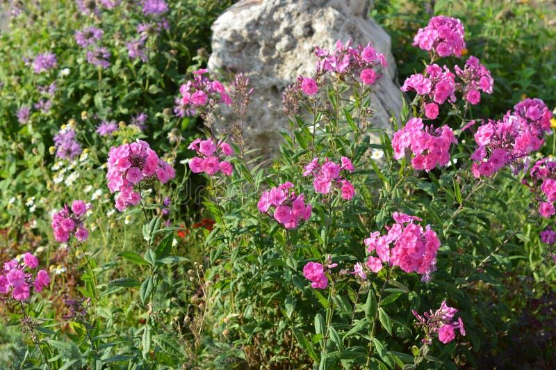 Stein umgebene rosa Blumen stockbilder