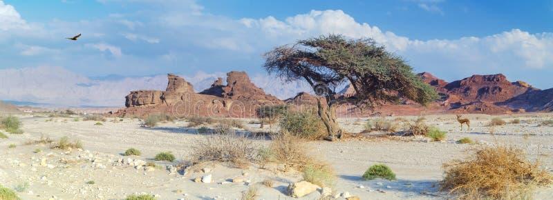 Steinbildungen in der geologischen Bildung von der Jurazeit in Timna parken stockbild