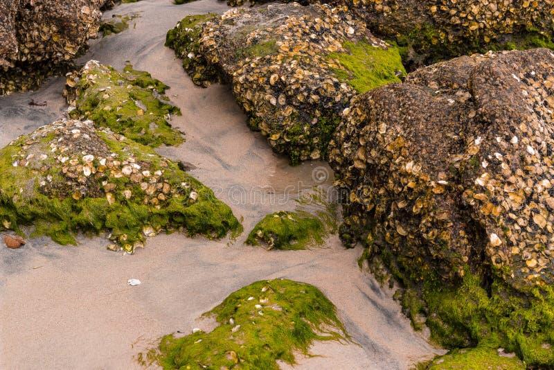 Steine auf dem Strand mit Moos stockfoto