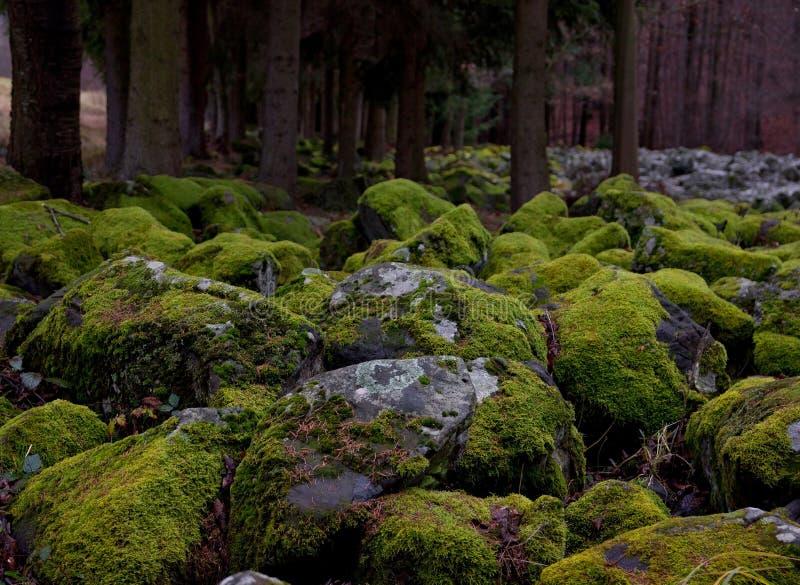 Steine bedeckt durch Moos stockfoto