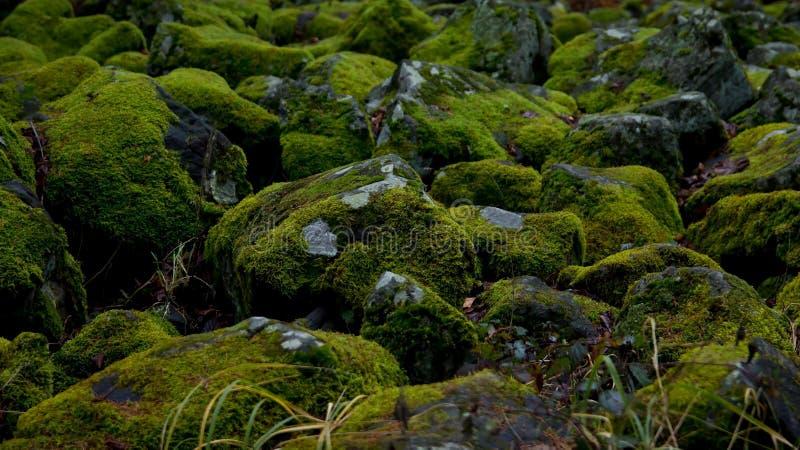 Steine bedeckt durch Moos lizenzfreie stockbilder