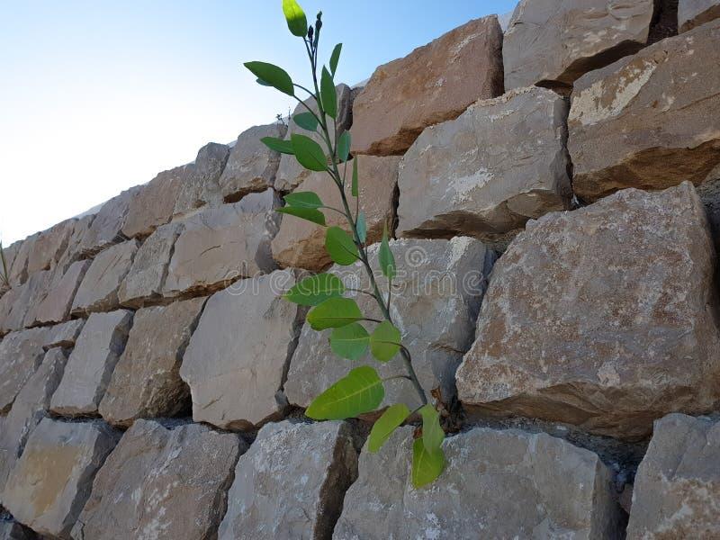 Steine fügten, zusammen einen Wandbeschaffenheitshintergrund zu schaffen stockfotos