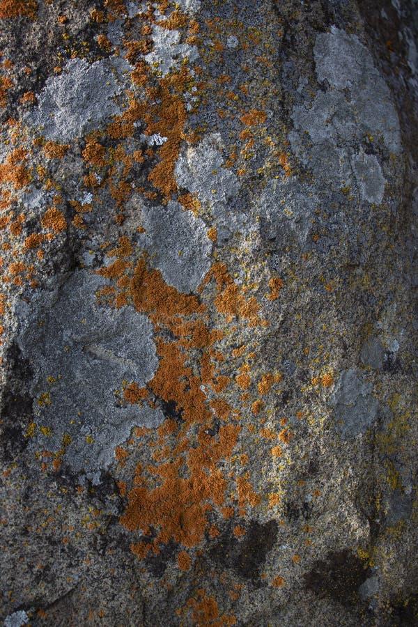 Steine fotografierten Nahaufnahme, schöne graue Beschaffenheit des Frühlinges lizenzfreie stockfotos