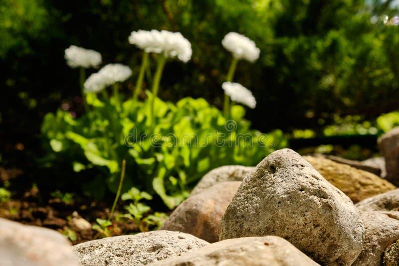 Steine im Garten auf einem Hintergrund von Blumen im Sommer lizenzfreie stockfotografie