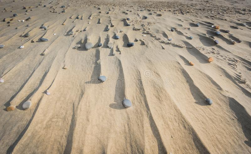 Steine und Antriebe im Sand stockfoto